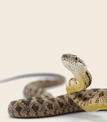 구급차에 그려진 뱀의 비밀